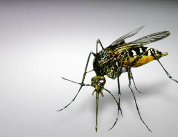 Mosquito Problem_-4833215700882734288