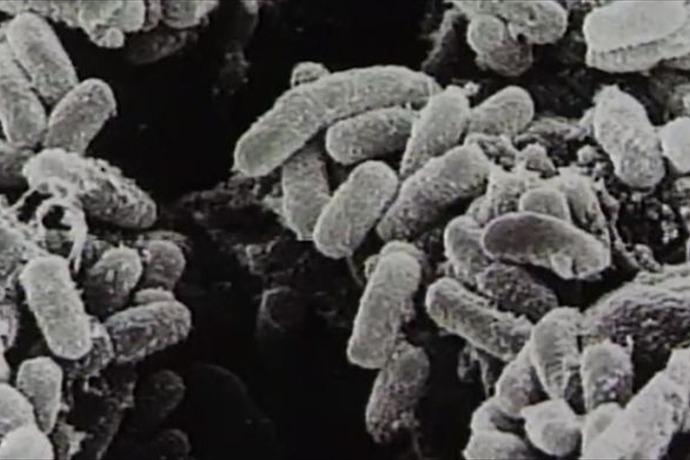 Anthrax Investigation_-1884778362042366475