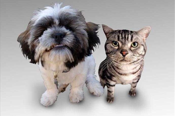 Pet Adoption Event this Weekend_-5366744000082129605