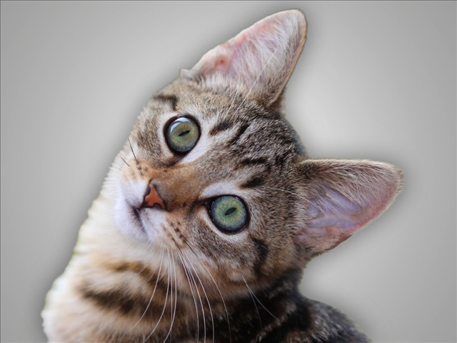 cat_1447216960550.jpg