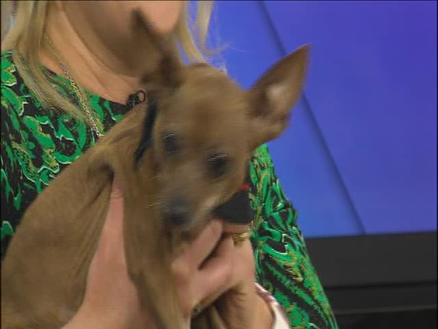 DAWGS for Adoption- Little Ruby_44926869-159532