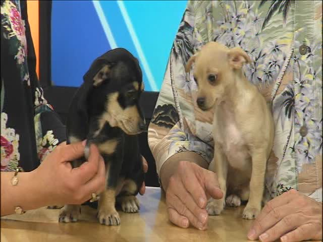DAWGS for Adoption- Bella and Jacob_68936035-159532
