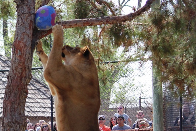Amarillo Zoo Easter 2_5764365528117301067
