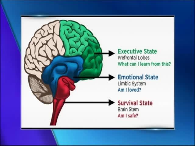 Understanding Your Child-s Brain_19730246-159532