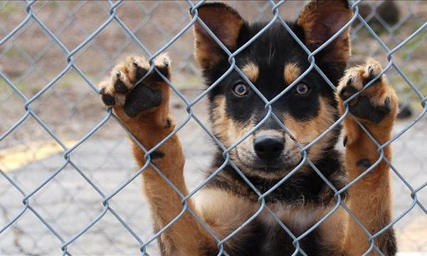 save dog_1483027810839.jpg