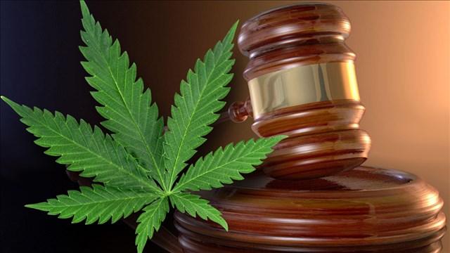 Marijuana Court