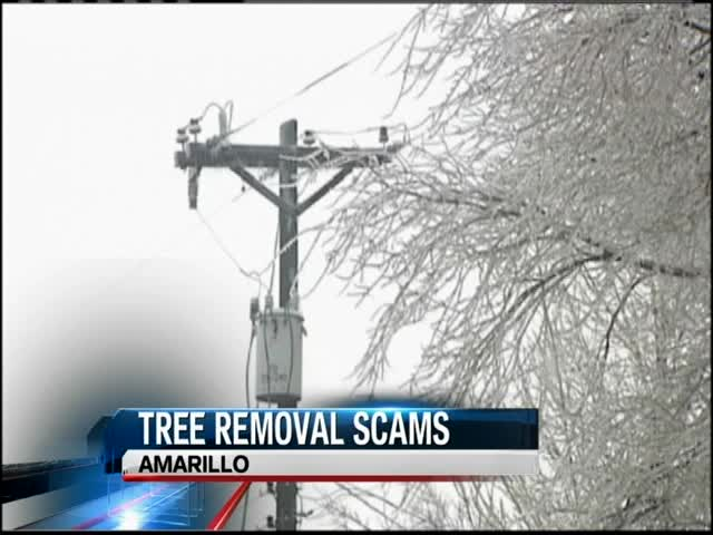 tree removal scam_75239946
