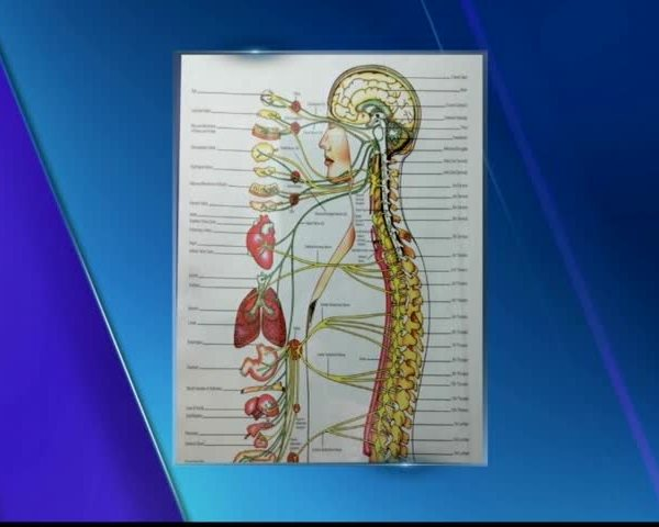 Healthcare Starts with Your Nervous System_65736730