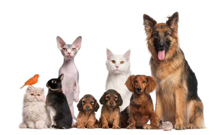 pets--dog--cat--rabbit--puppy--bird-jpg_158977_ver1_20170130201300-159532