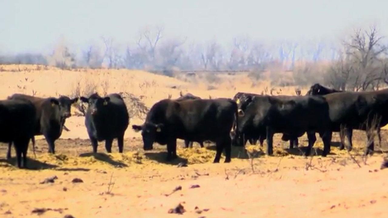 cattle fire44639839-159532