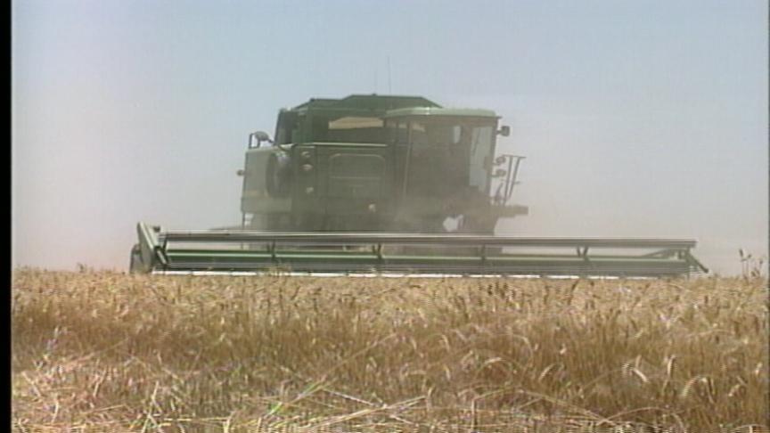 wheat_1490117448753.jpg