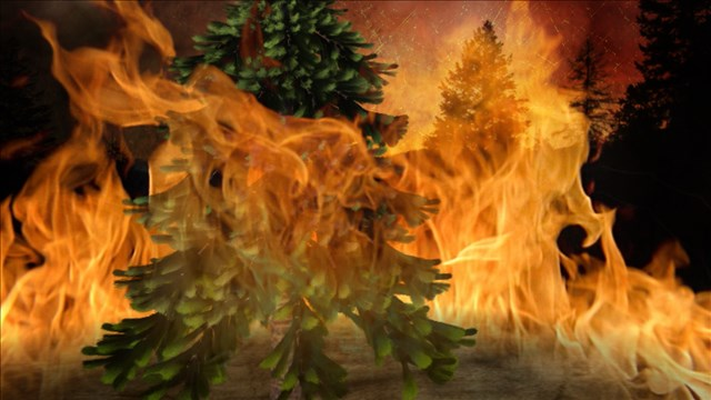 wild fires.jpg