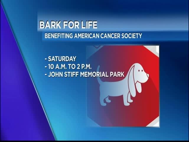 Bark for Life_77469202