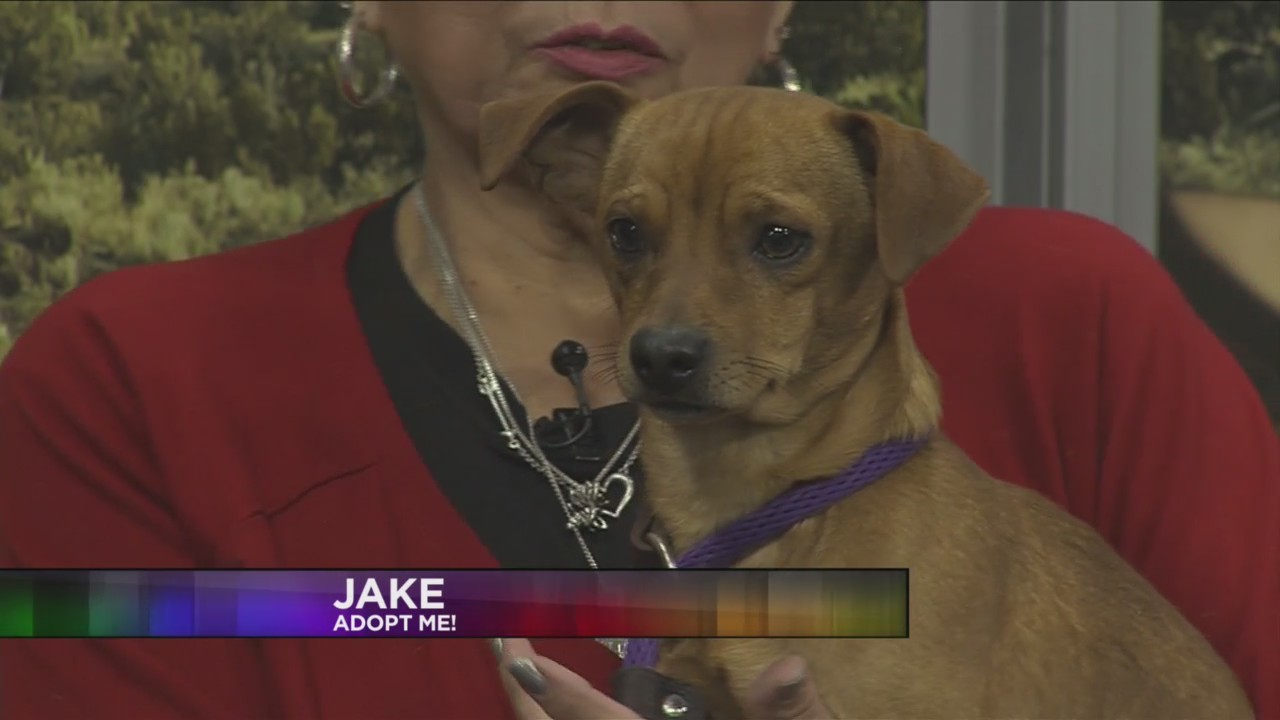 SPCA: Jake