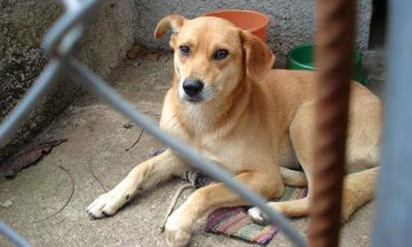 Dog at animal shelter_1717417630974451-159532