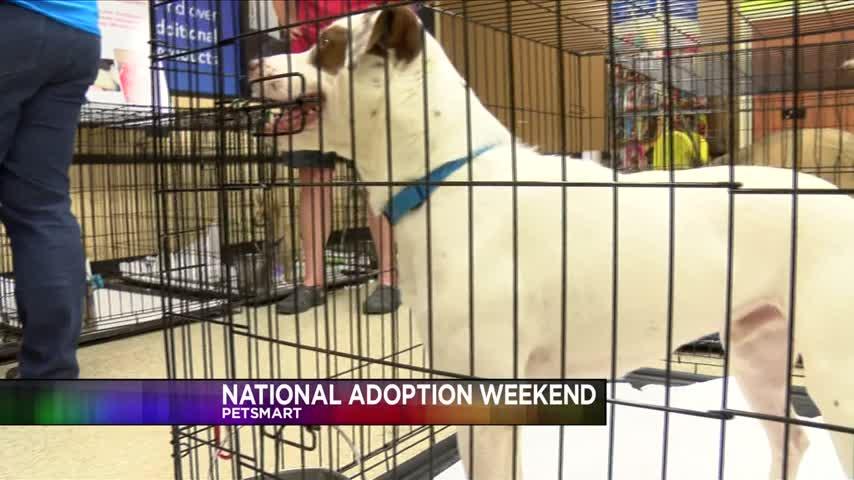 SPCA-PetSmart National Adoption Weekend_53354168