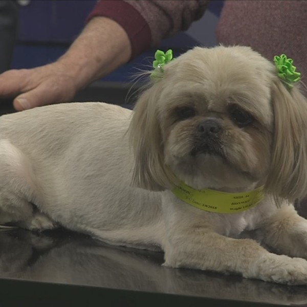 APHS: Pup Of The Week