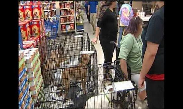 The PetSmart-SPCA National Adoption This Weekend_8544772_ver1.0_640_360_1505485233428.jpg
