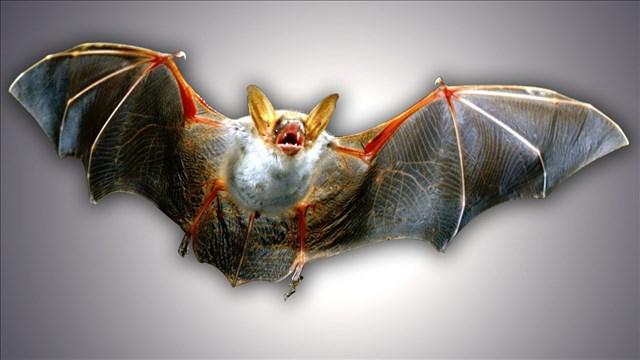 bat_1521062573211.jpg
