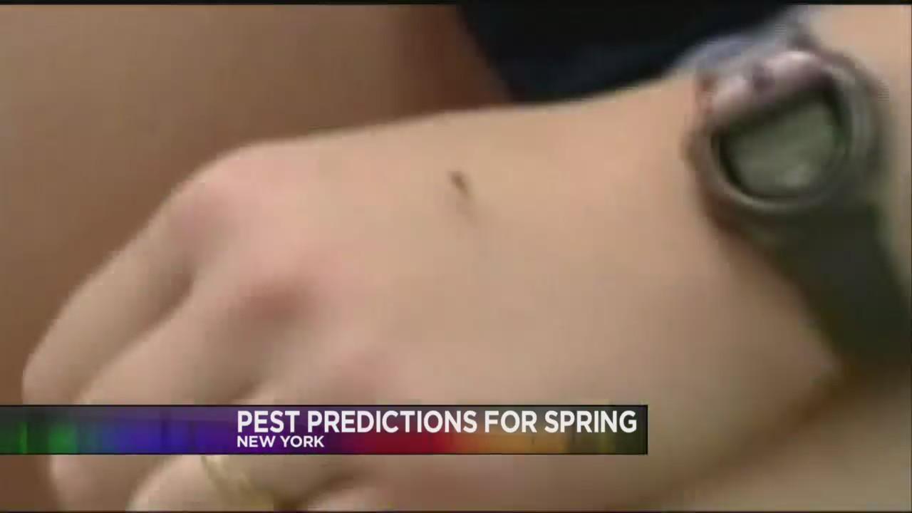 Consumer News - Spring Pests