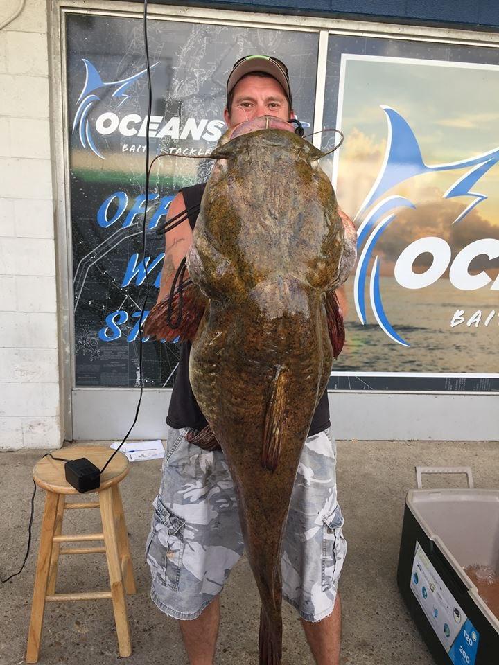 giant catfish-873703993
