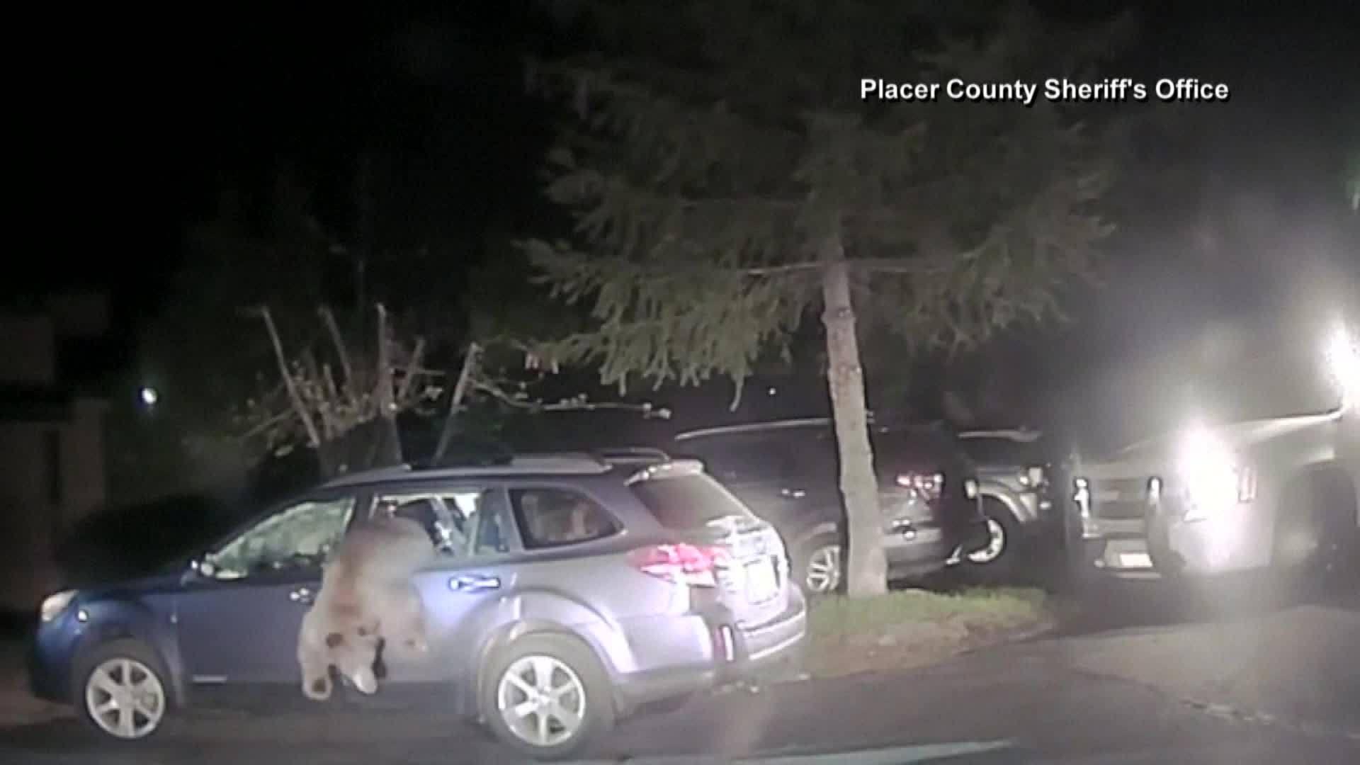 Deputy Breaks Window To Rescue Bear Trapped Inside Car