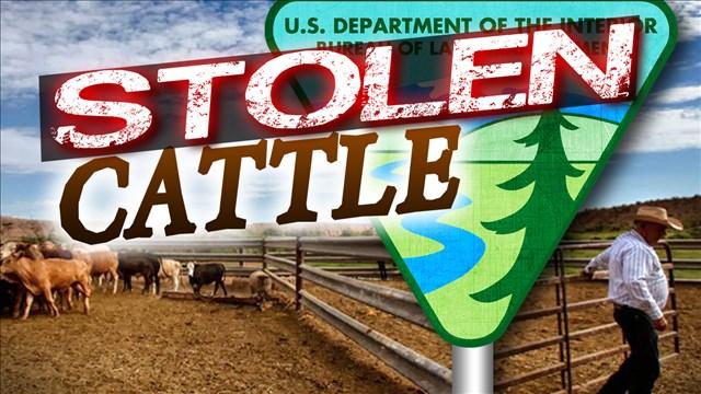 stolen cattle_1446225346276.jpg