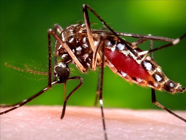 WEST NILE mosquito_1508451935254.jpg