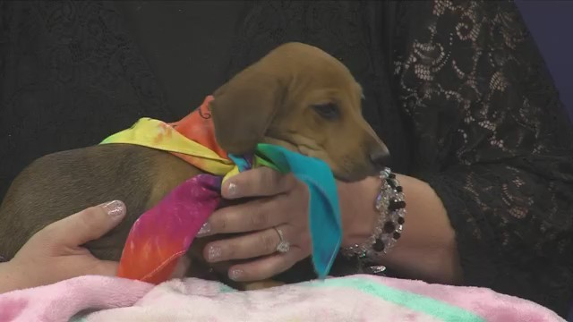 """Amarillo Animal Management & Welfare Joins """"Clear The Shelters"""""""