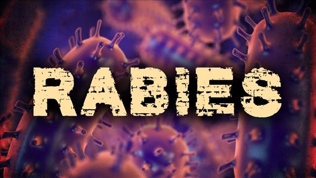 Rabies_1505237757848.jpg