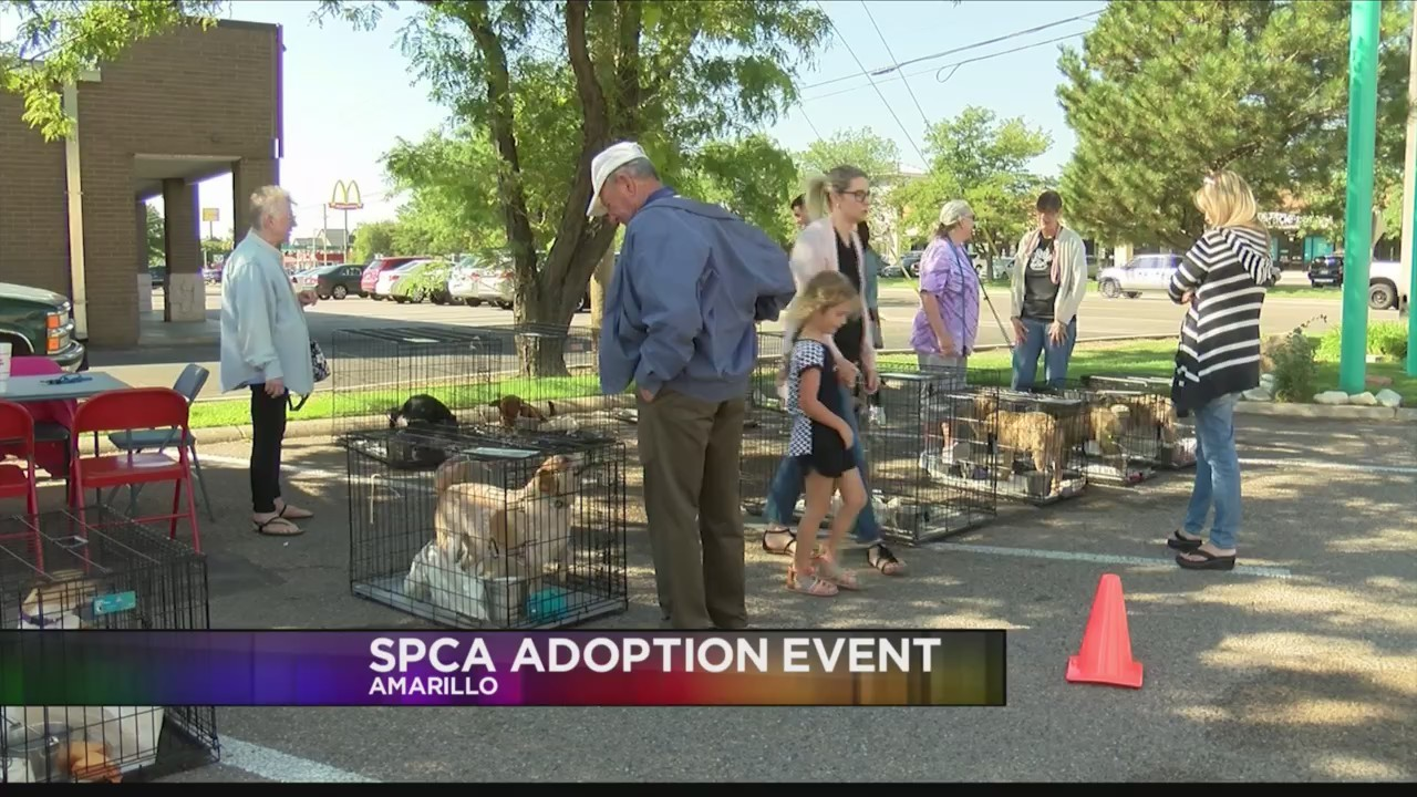 Amarillo SPCA is hosting an adoption event at Taco Villa on Saturday