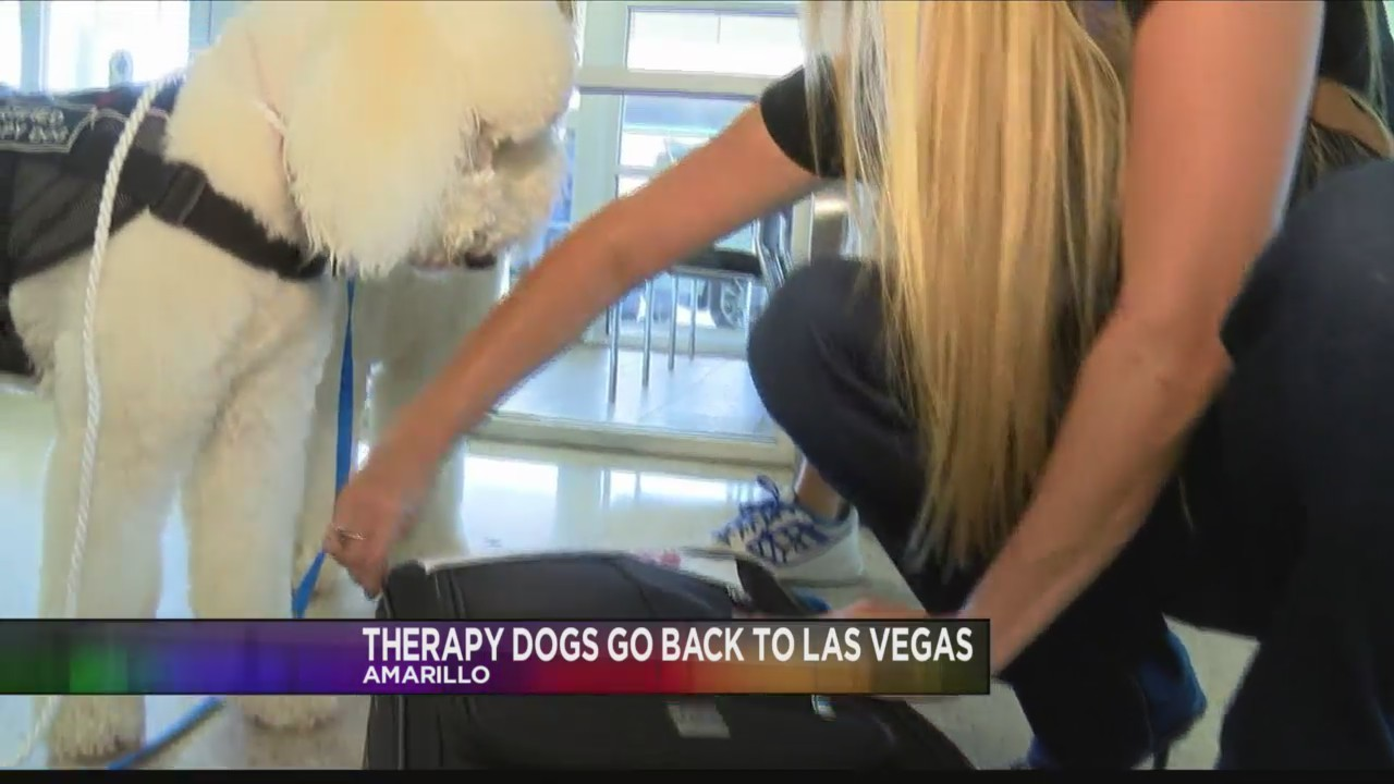 Therapy Dogs from Amarillo Headed Back to Las Vegas