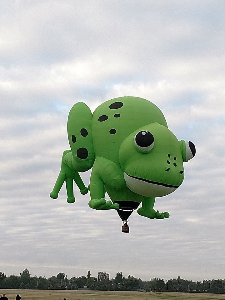 frog_1536443642334.jpg