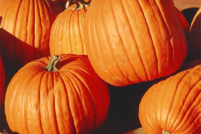 NWTH Halloween Carnival_7940290184147977433