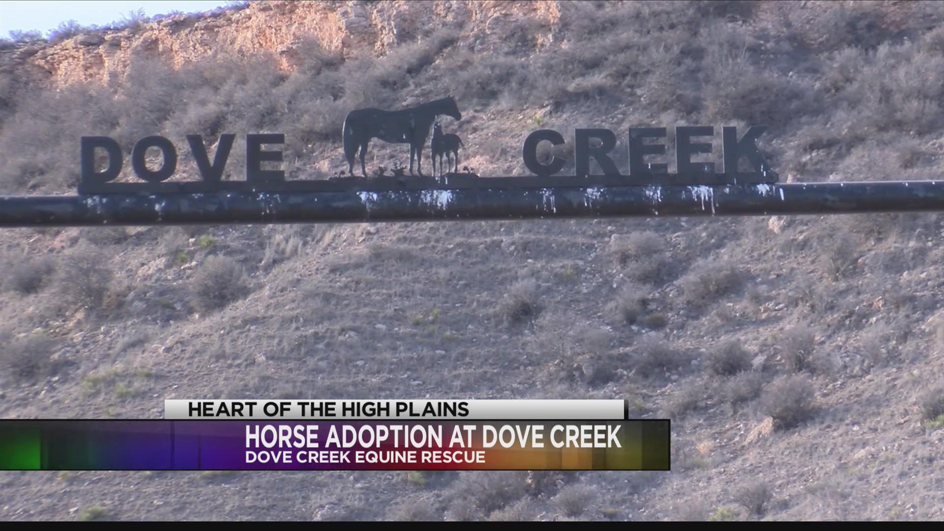 Dove Creek Equine Rescue Provides Safe Haven for Horses