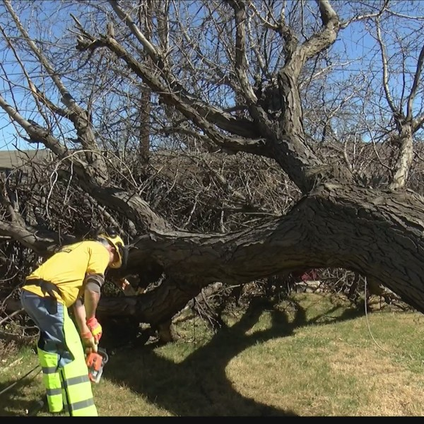 Insurance Agents Busy Dealing With Wind Damage Claims