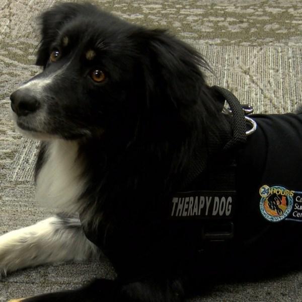 THERAPY DOG AP_1555521586975.jpg.jpg