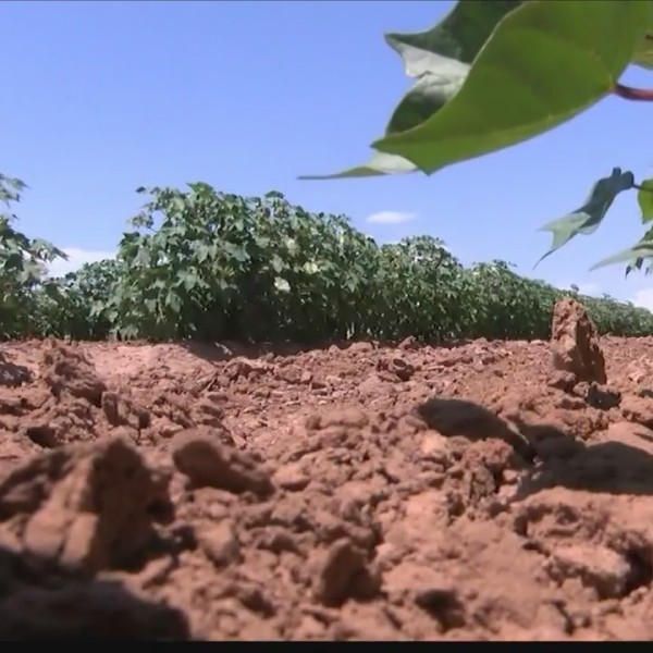 Recent rains may be too much for area farmers